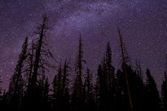 Through the Trees (LevixBroski) Tags: canon rebel sl1 night sky star stars milky way milkyway long exposure longexposure utah ut 801 slc saltlake salt lake rokinon samyang 24mm bower tree trees pine pines adventure mountains mountain hiking water red white black blue green