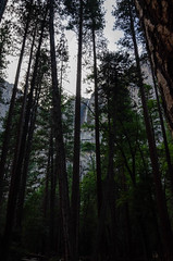 Upper Yosemite Falls Through the trees (christophercraig) Tags: tree plant waterfall yosemitevalley california unitedstates us