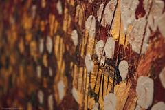 Autumn leaves (Daria Kucharczyk Photography) Tags: macro painting impasto art gallery closeup colors