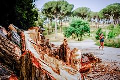 2018:05:15 12.01.01 (Lea Ruiz Donoso) Tags: atleta atletismo deportes 2018 verano naturaleza bosque arboles sony españa europa madrid learuizdonoso photography