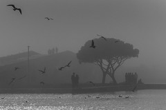 As I dreamed a dream / To stand out in the crowd (Özgür Gürgey) Tags: 2018 70300mm bw büyükçekmece d750 nikon birds grainy lake people silhouettes istanbul
