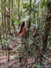 Fallen fronds ([S u m m i t] s c a p e) Tags: springbrooknationalpark hiking trailrunning