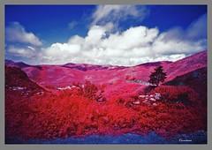 In My Travels-Thru the Marin Headlands 5 (Oscardaman) Tags: of my travelsthru marin headlands 5 aerochrome 6x7 originally