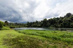 20180622-5D4_0812 (shutterblades) Tags: bukittimahnaturereserve macritchiereservoir macritchietrail sicc scenery singaporeislandcountryclub treetopwalk windsornaturepark