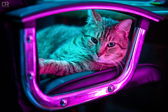 """""""Hotline Drive"""" (Dext-R Photography) Tags: cat neon drive miami relax neonlight nightlights blue pink"""