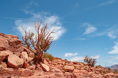 DSC_0963 (angiemulthup) Tags: grand canyon west arizona desert