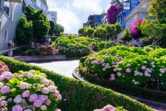 Lombard Street (Atibordee_K) Tags: san francisco usa unitedstates lombard street