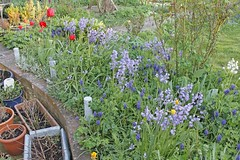 April in my Cottage Garden (isisjem22) Tags: april 2018 mycottagegarden