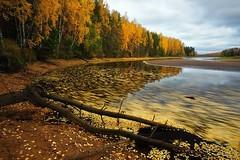 Vẻ đẹp nước Nga (trinh_huong_ocean) Tags: russia nga road river tree yellow building
