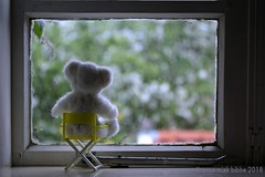 LOLLY VINDT HET LEUK OM NAAR DE BLOEIENDE APPELBOOM TE KIJKEN || LOLLY LOVES TO SIT ON THE WINDOW SILL AND TO WATCH THE APPLETREE IN FULL BLOOM (Anne-Miek Bibbe) Tags: happyteddybeartuesdays teddybear teddybeer lolly beer beertje speelgoed toy spielzeug giocattoli juguetes bringuedos jouets canoneos700d canoneosrebelt5idslr annemiekbibbe bibbe nederland 2018