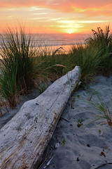 Driftwood (lowcountryboil) Tags: rockawaybeach oregon coast beach driftwood wood sand sunset pacific ocean