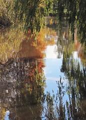 Surreal (carlos_ar2000) Tags: rio river reflejo reflected reflection color colour planta plant arbol tree nturaleza nature distorsion distortion rama branch tigre buenosaires argentina