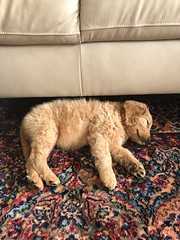 Sabrina's Izzy is settling in to her new home just fine!