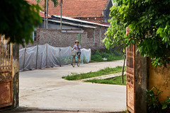 Man riding a bicycle in Vietnam (BryonLippincott) Tags: vietnam vietnamese vietnameseculture asia southeastasia countryside country hanoi rural agriculture farm farming ruralscene farmscene farmland industry production community outdoors sunlight vn ride gate courtyard trees bicycle bike pedal shadows outside man one