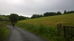 Sweet Rain. (mcginley2012) Tags: ireland hill tree rain road fence drumlin countryside rural green cameraphone lumia1020 man
