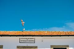 Praia de Miramar, Vila Nova de Gaia (Gail at Large | Image Legacy) Tags: 2018 portugal praiademiramar vilanovadegaia gailatlargecom