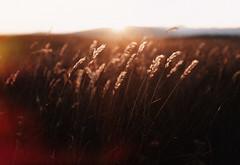 (Bazzerio) Tags: 35mm analogue digital grainy fujifilm x100f bazzerio travel sunset light dof bokeh