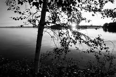 DSC06058rx100IV (jaaselin) Tags: finland suomi luonto finnishnature pirkkala pyhäjärvi lake summer sunset evening auringonlasku järvi koivu birch beach boats rowboats veneitä satama laituri blackandwhite mustavalkoinen pier photography colors