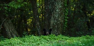 Spirit of the Forest, Shenandoah National Park