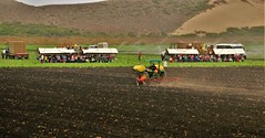 Harvesting and Plowing (Michael T. Morales) Tags: farm green agriculture farmequipment rows furrows montereycounty salinasvalleyag harvest soil lettuceharvest