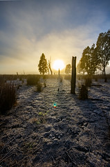 Frosty winters morning (AWLancaster) Tags: frost hdr landscapes wintersmorning sunrise sun wetlands reedyswamp canon beautifulnature australia nature foggy fog