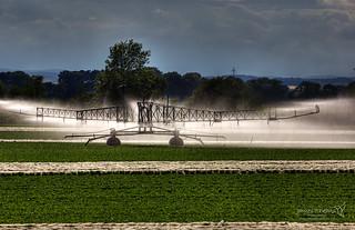 Irrigation at Ladybank 11 July 2018 00016.jpg