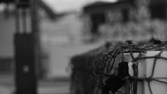 DSC06968 (A Common Courtesy) Tags: a common courtesy wellington auckland new zealand camera photo bw color black white day night monochrome bokeh sony nex 5a nex5a focuspeaking minolta mc pg 50mm 14rokkor fotodiox adapter