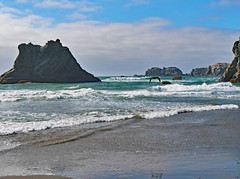 bn1070341BirdOnA-Wire (thom52) Tags: bandon or oregon coast coastline beach fog