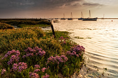 Sea Lavender (andybam1955) Tags: quay landscape morston morstonquay coastal rural sky northnorfolk boats clouds norfolk sea