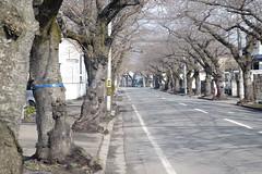 Sakuragawa street (しまむー) Tags: fujifilm xe2 minolta mc rokkor pf 58mm f14 proneg hi holiday pass shimokita hachinohe 下北 八戸