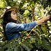 Colombia - Growing coffee, sowing peace