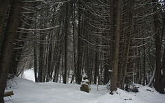 Forgotten Tomb (ETt_) Tags: tomb snow winter forest pins pintrees scary dark woods landscape horror branches epitaph stones
