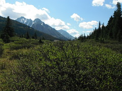 Alpines Alberta Canada (Mr. Happy Face - Peace :)) Tags: forest mountains art2018 yyc alberta canada nature trees sky summer