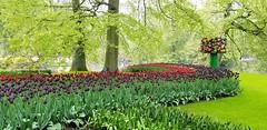 Birds Tree (Helenɑ) Tags: tulips keukenhof netherlands festival lisse park garden flowers trees tree grass