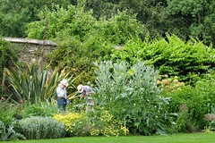 A horticultural conundrum (ho_hokus) Tags: 2018 england fujix20 fujifilmx20 lacock lacockabbey nationaltrust uk wiltshire abbey garden people plants flowers horticulture