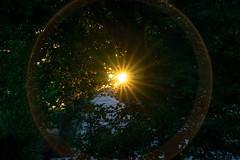 Sunstar Supernova (John Brighenti) Tags: sony alpha a7 evening sunset photowalk rockville maryland md twinbrook trees leaves sun star sunstar flare camera 70300mm lens oss sel70300g