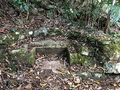 Ancient seating ([S u m m i t] s c a p e) Tags: springbrooknationalpark hiking trailrunning springbrook queensland australia