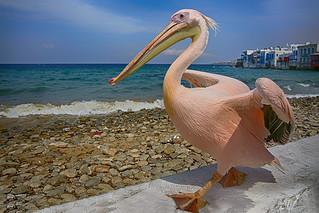 The Mascot of Mykonos