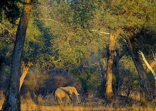 Zimbabwe, big is the forest
