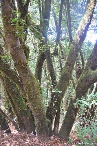 Національний парк Гарахонай, Гомера, Канарські острови  InterNetri  0712