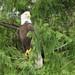 Eagles 5j