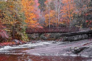 Fall Foliage Footbridge