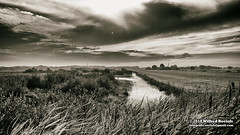 DSC_4439bw gm (Roelofs fotografie) Tags: wilfred roelofs nikon d5600 nature holland dutch 2018 landscape sepia black white outdoor water clouds sun picture fotgrafie foto grass adobe sky sunset field blackandwhite