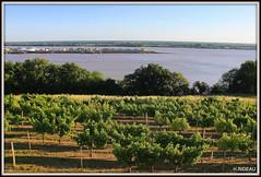 Panorama sur l'estuaire de la Gironde et le bec d'AMBES (Les photos de LN) Tags: paysage panorama nature estuaire gironde garonne dordogne aquitaine sudouest vignes végétation versant coteaux fleuves rivières