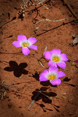 The trio! (Uhlenhorst) Tags: 2011 australia australien plants pflanzen flowers blumen travel reisen unidentifiedplant coth coth5