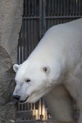 180718_013_3106 (123_456) Tags: zoo diergaarde blijdorp rotterdam netherlands