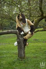 _DSC0041 (MM Furry Photo) Tags: bunny rabbit fursuit fursuiting portrait critterfactory pantoffel