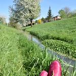 Schuhe und Kirschbaum thumbnail