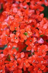 Flores (guerreronoise) Tags: xs rebel eos fernandoguerrero magico mexico naturaleza nature flowers flores