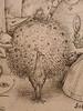 BRUEGEL Pieter I,1557 - Superbia, l'Orgueil-detail 52 (Custodia) (L'art au présent) Tags: art painter peintre details détail détails detalles drawings dessins dessins16e 16thcenturydrawings dessinhollandais dutchdrawings peintreshollandais dutchpainters stamp print louvre paris france peterbrueghell'ancien man men femme woman women devil diable hell enfer jugementdernier lastjudgement monstres monster monsters fabulousanimal fabulousanimals fantastique fabulous nakedwoman nakedwomen femmenue nude female nue bare naked nakedman nakedmen hommenu nu chauvesouris bat bats dragon dragons sin pride septpéchéscapitaux sevendeadlysins capital